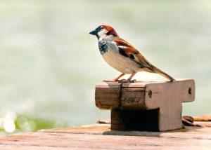 kleiner vogel im hafen
